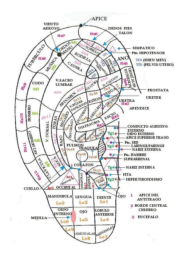 Cartografia-auriculoterapia