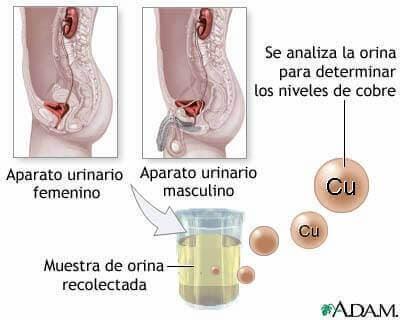 metabolismo del cobre