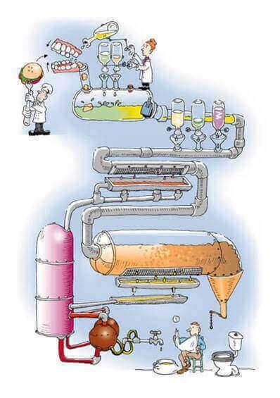 como funciona el aparato digestivo