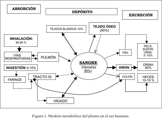 metabolismo-del-plomo