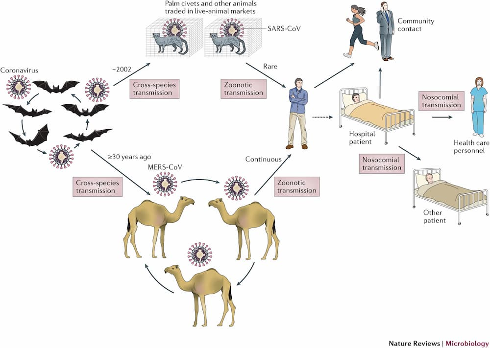 ansmision-zoonotica-de-los-coronavirus